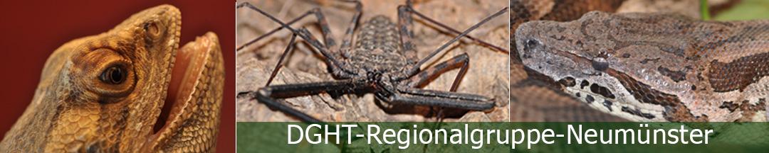 DGHT Regionalgruppe Neumünster